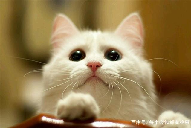 养猫时在环境的细节上多用心,猫咪幸福感会更强