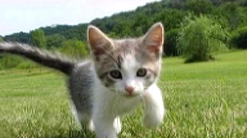 原来猫咪跑起来的动作是这样的
