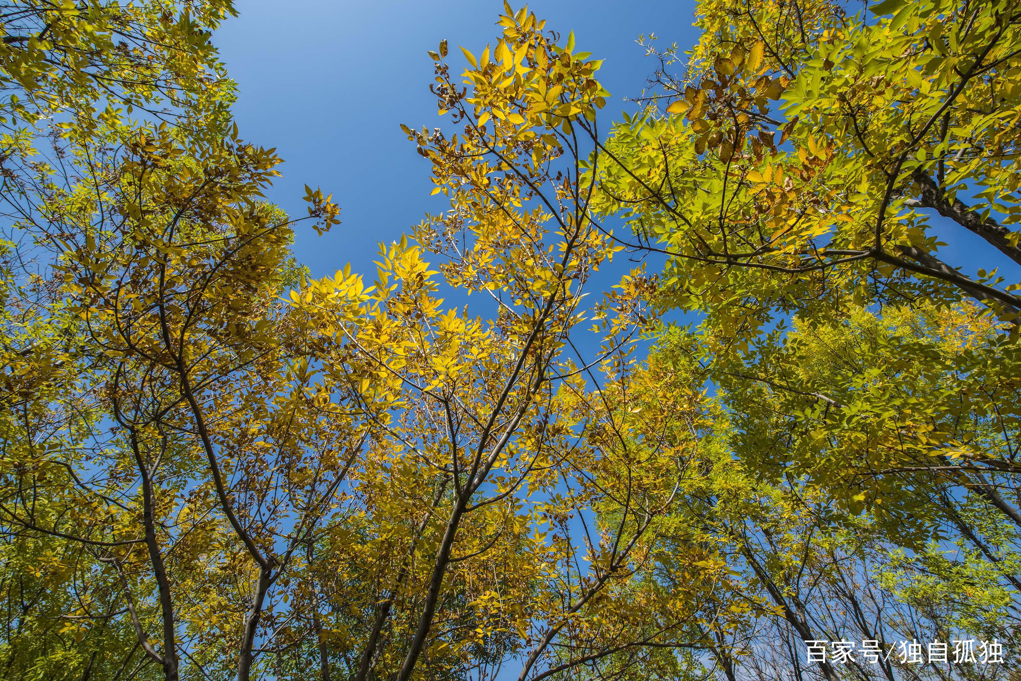 风景写实——霍州七里峪秋色