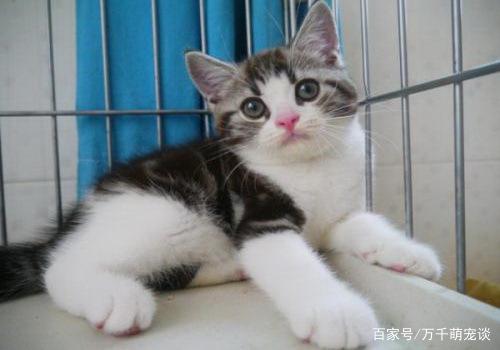 猫猫喜欢静静陪着你,它可爱灵气又神秘,收养一只去