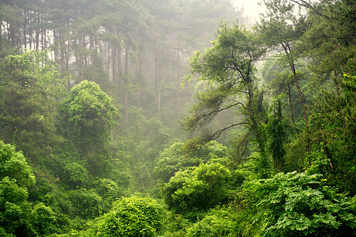 除了尚志帽儿山,桂林森林公园,非常美丽的知名公园图片