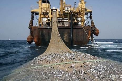 """这渔船被称为""""海洋收割机"""",每次捕几千吨海鲜,它是怎么做到的"""