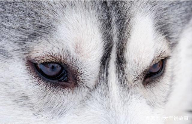 a b c d 答案解析: a:这是一个相对比较容易猜得中的动物眼睛,我想大