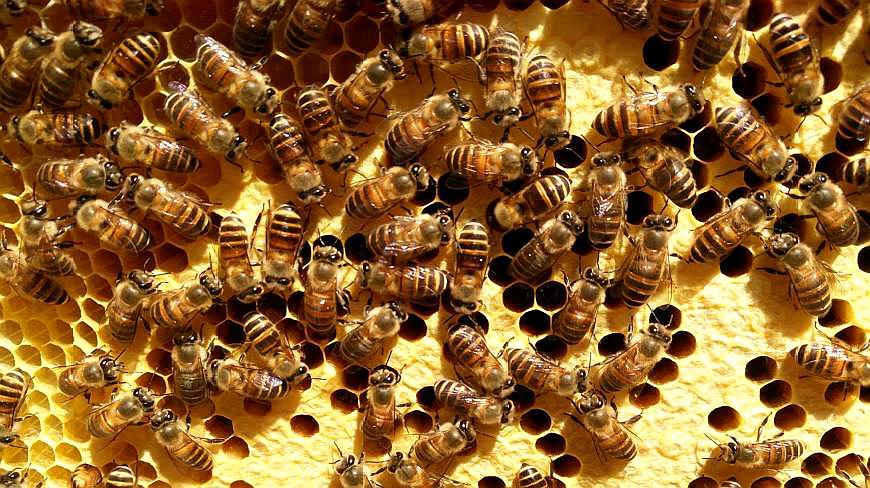 你的努力,蜜蜂看得见:农村小伙养蜂三月迎来最开心的一天