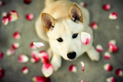狗是主要通过这几点来认出主人,一不注意还会认错人!