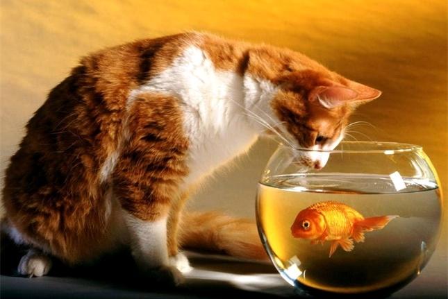 铲屎官们别再傻傻跟风了,金鱼等小动物真的不适合当猫咪的玩具