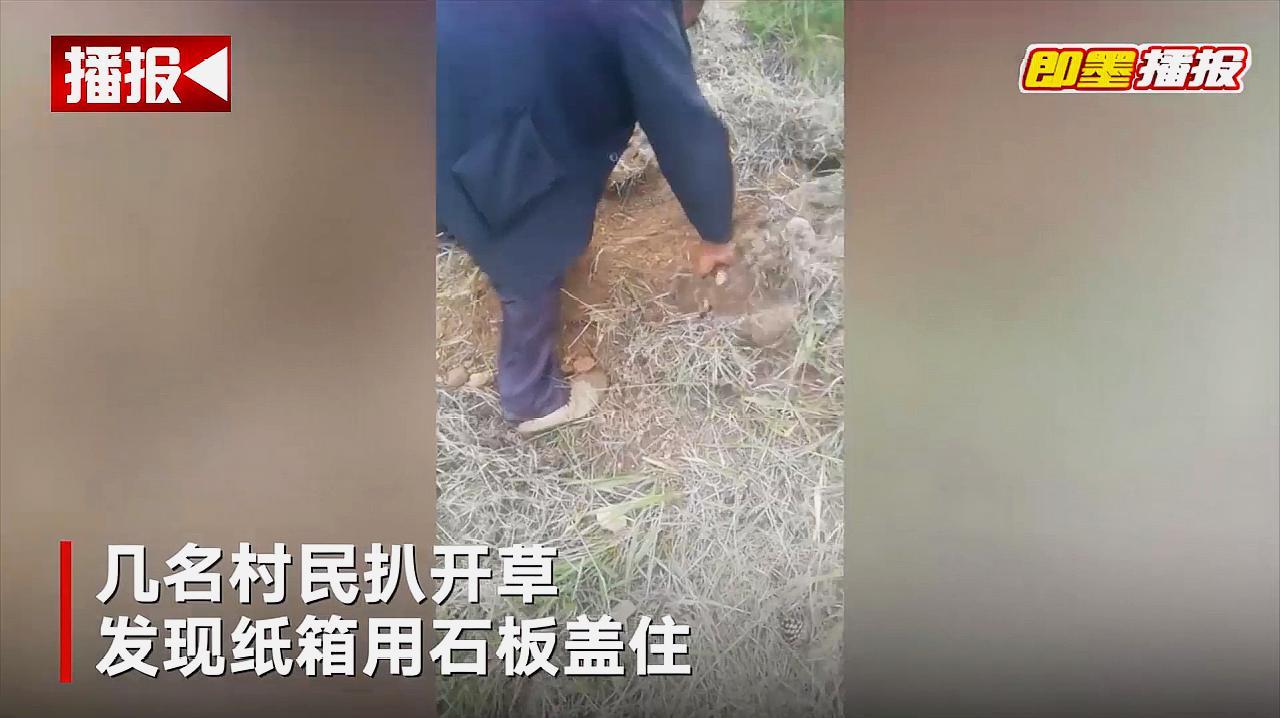 荒坡地下传出哭声 采蘑菇村民循声土中挖出一活婴