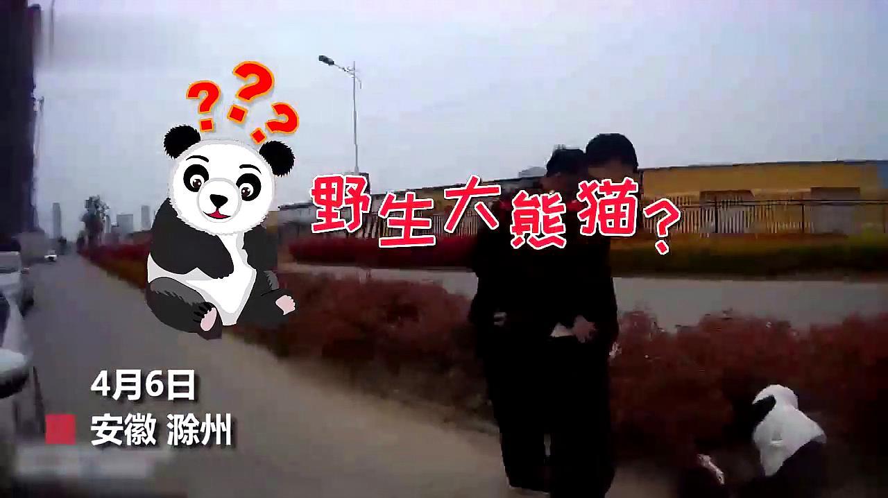 """群众报警称在草丛里发现""""大熊猫"""",民警出警一看……"""