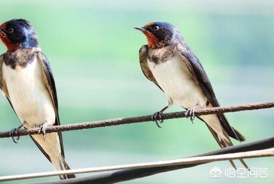 站在高压线上的鸟,为什么没有炸毛?真相是鸟不带电