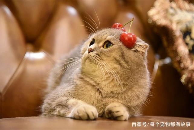 猫咪的这些部位一个比一个重要,犯错的时候最好别用力打