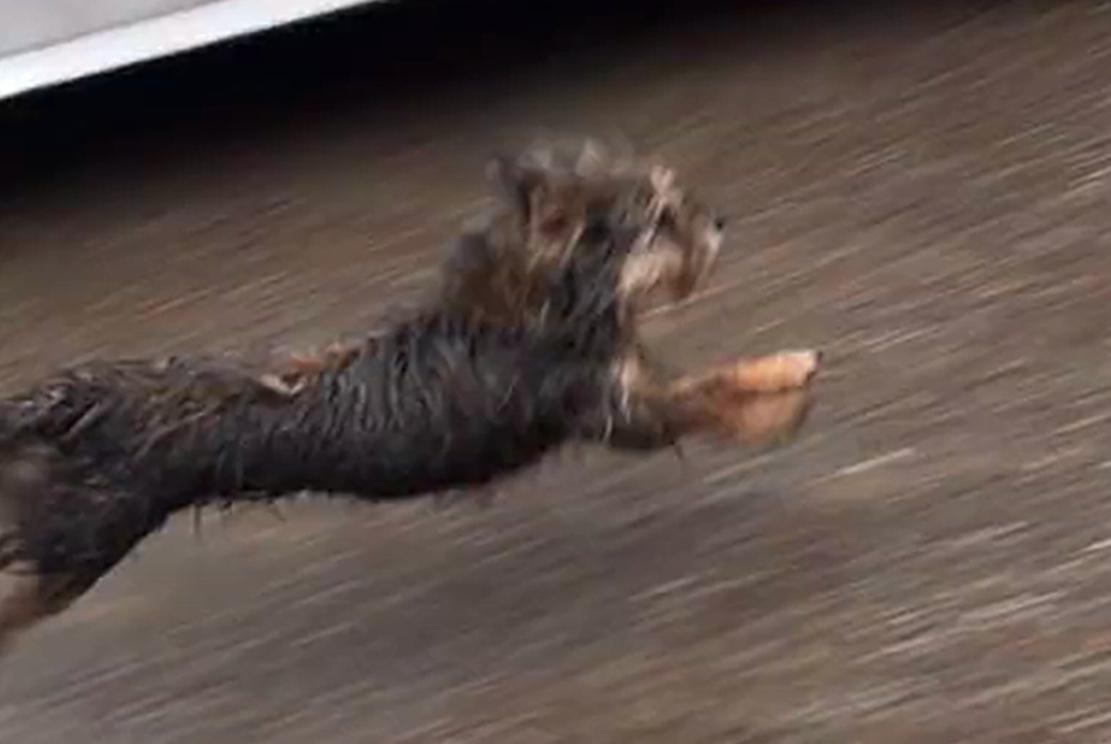 好心人喂流浪狗,狗子追着汽车撵半里地,狗:做我的主人好不好…