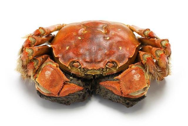 十个冷知识!大闸蟹以前是穷人的食物!
