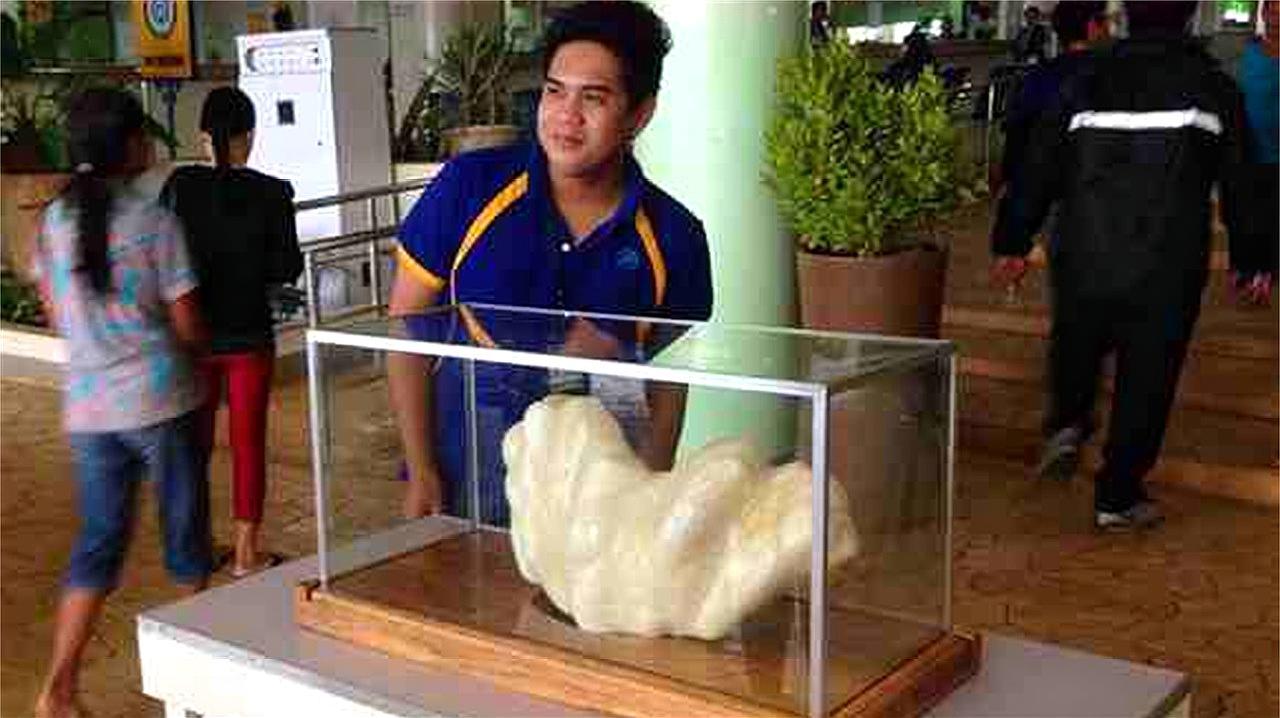 价格一亿美元的珍珠,被一名渔夫丢在床底10年!