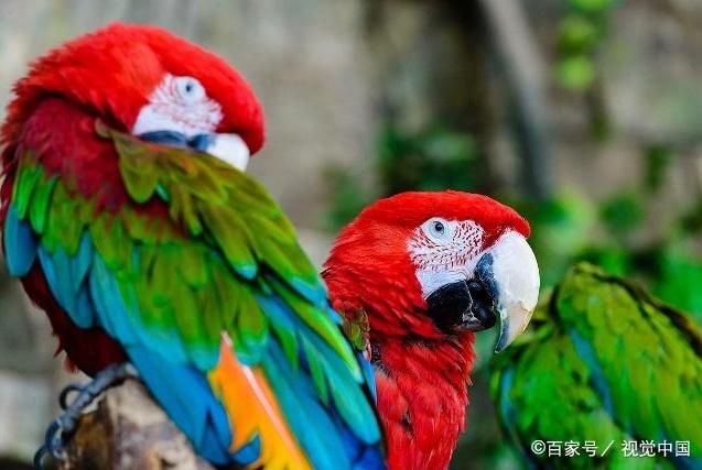 年轻男子养鹦鹉竟然引起肺炎,背后原因大部分人第一次听说