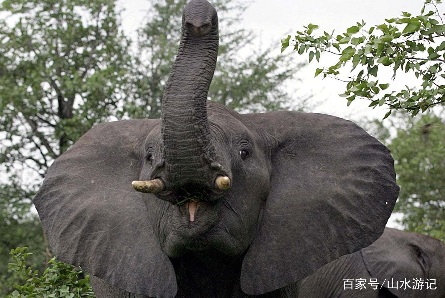 旅游趣闻:南非疑似犀牛偷猎者被大象杀死,然后被狮子吃掉