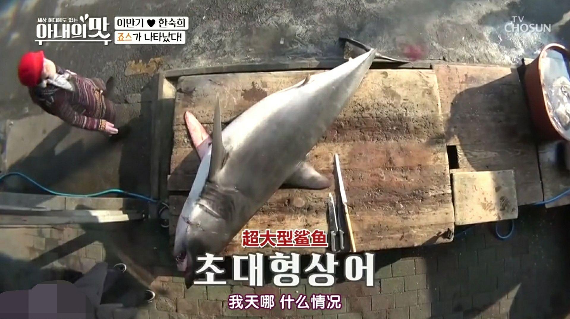韩综播放捕杀鲨鱼片段,主持人解释不是故意捕捞,中国网友不买账