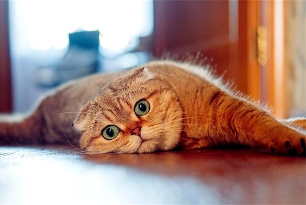 养猫,猫玩具似乎是必不可少的,但总有那么一两只不喜欢