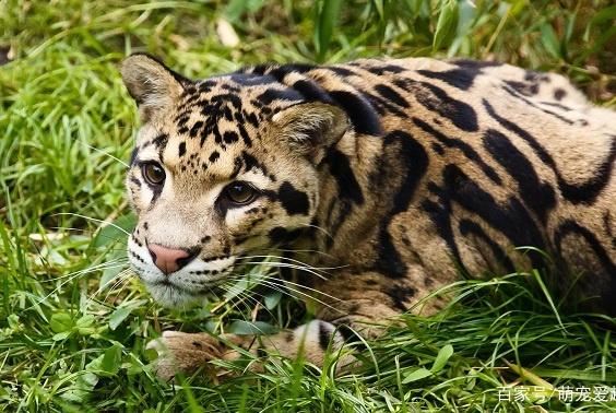 近年来灭绝的十种野生动物,灭绝的物种还在继续向人类说再见!