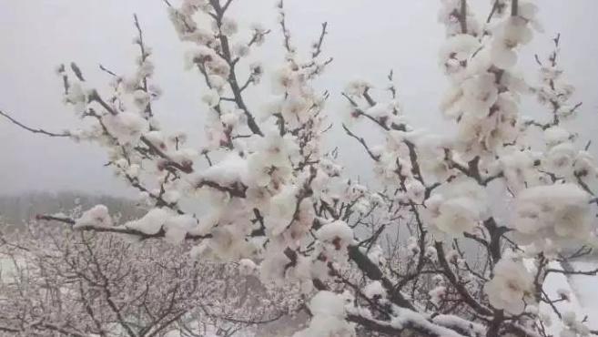 气温又双叒叕抖了!北京郊区降雪城区飘雨,明天气温飙升