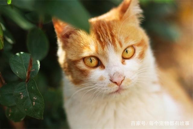 把一只猫咪训练成跟狗狗一样听话捡球,有可能吗?眼见为实