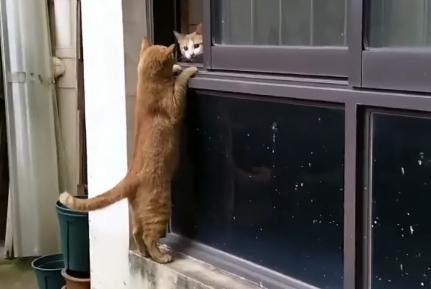 两只猫咪依偎在一楼窗口,恰好被网友看到:猫粮吃的噎得慌!