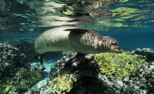 5种即将灭绝的珍贵动物,余生请让我们用心地保护它