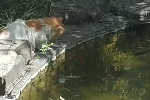 猫趴在水塘边,接下来的动作男子看懵,网友:现在的猫都自食其力