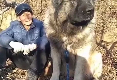 老爷爷他捡到了一只跟手一样大的狗,一年后有很大的变化