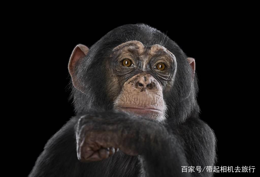 人与动物之性_他希望他的照片能够引导观众思考,人与动物,人与自然之间的关系.