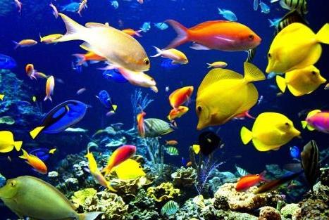 如果将一块石头扔到太平洋,它是会被压碎,还是一直沉到海底?