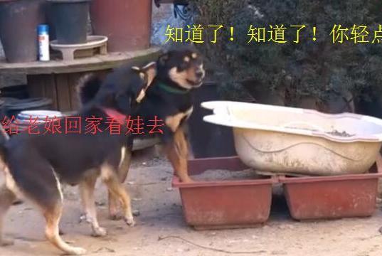 狗爸跟狗妈带娃有什么区别?网友:从头到脚,都不一样
