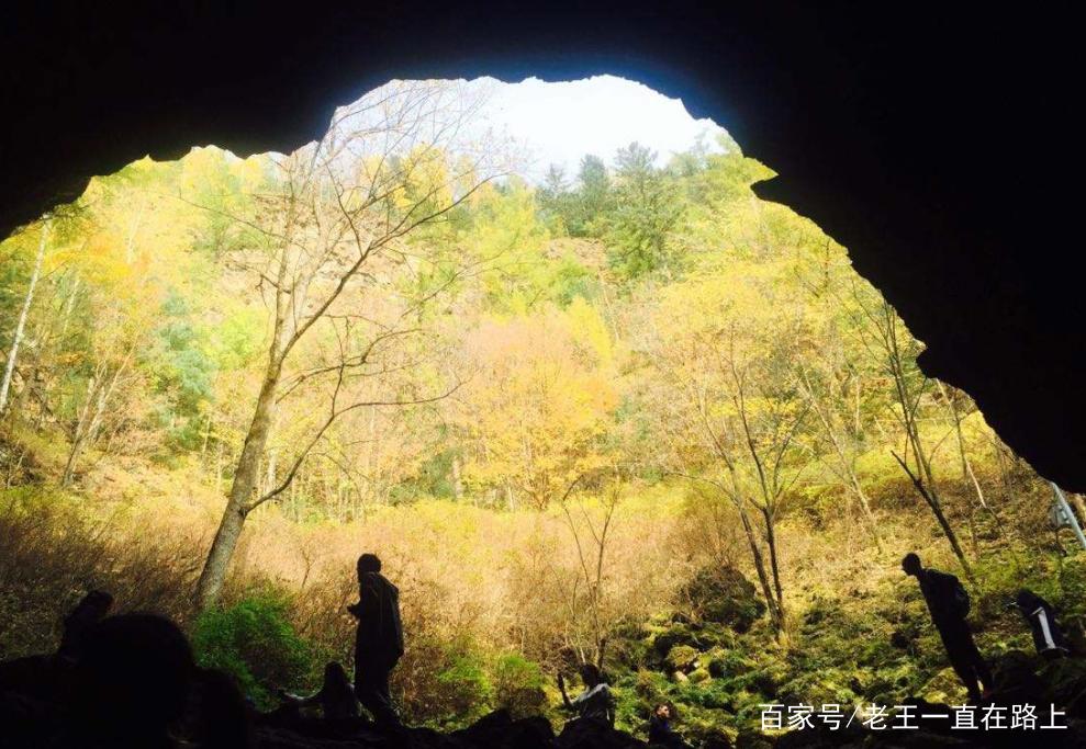 """地下森林又称""""火山口原始森林"""",和镜泊湖区1200多平方公里的面积共图片"""