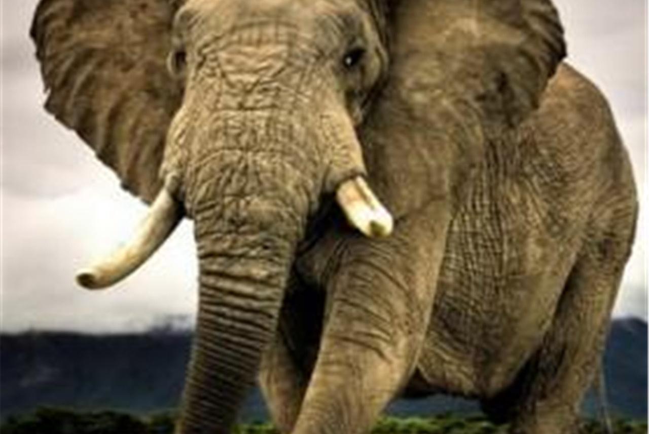 """""""大象""""神机入侵海外市场,颜值秒杀OV!"""