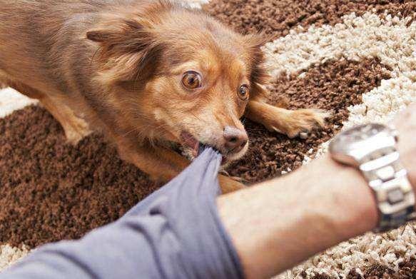 """农村的老话""""恶人养恶狗"""",为什么狗狗会变恶呢?"""