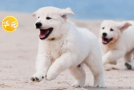 养一只狗,跟养两只狗有什么区别?