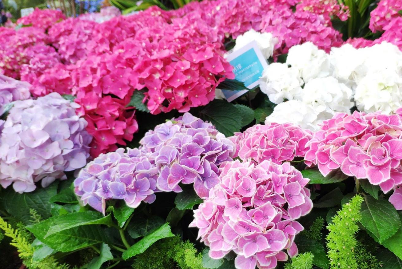 赏花正当时,深圳花展3天,16万人与繁花约会,天天游客爆棚