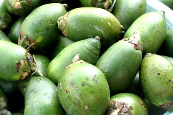槟榔果实中含有多种人体所需的营养元素和有益物质槟榔烘干机批发,如有机酸、氨基酸、脂肪、槟榔油、生物碱、儿茶素、胆碱等成分   .图片