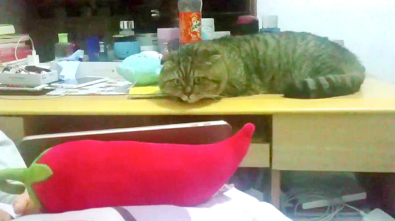 """主人让猫做喜怒哀乐的表情,结果猫的反应让人笑喷""""表演走心了"""""""