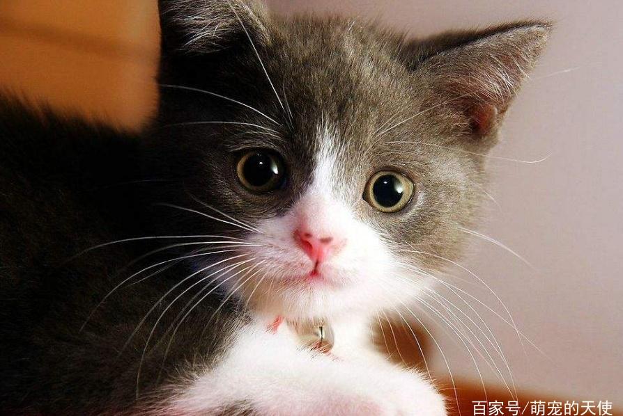 尾巴也是猫身上重要器官!为什么说猫不能拉尾巴?
