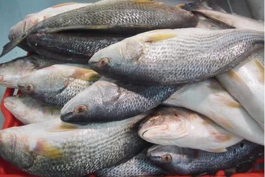 鱼摊上的死鱼都去哪儿了?卖鱼小贩:做成这3种食物,人们贼爱吃