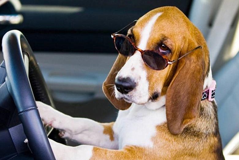 狗主吐糟自家的狗有可能统治世界,网友:真是没有一点毛病!