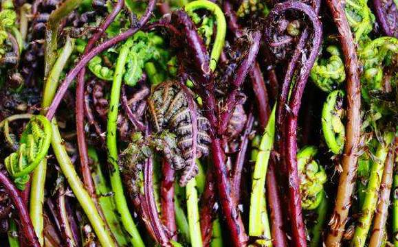"""紫菜应该都吃过!那么""""陆地紫菜""""大家吃过吗?"""