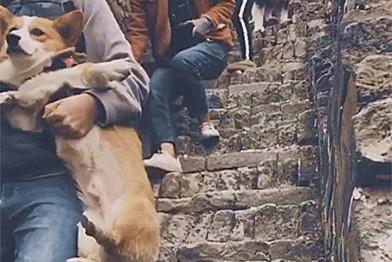 狗狗组团爬山,小狗都被主人抱着下山,阿拉:爸,你还等啥?抱我