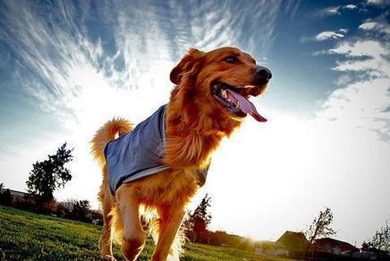 狗子都在旅行度假,而你却还加班,真是过得不如狗!