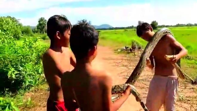 这些农村熊孩子胆真肥,大蟒蛇夫妻睡午觉竟硬生生的被
