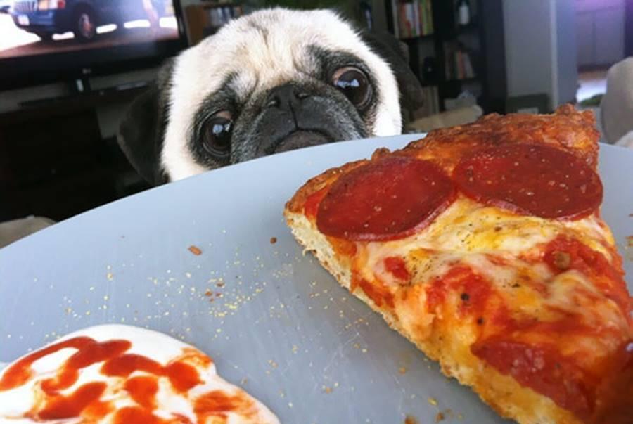 你是否跟宠物一样有肥胖和减肥的苦恼?看看这些图片会笑出声来!