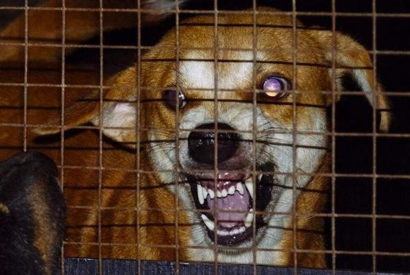 养狗的须知:狗狗发抖的全部原因都在这里,拿走不谢!
