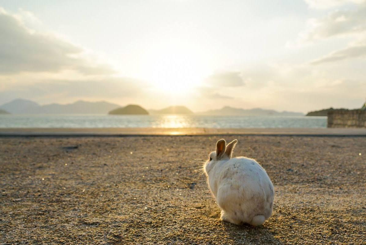 一边旅行一边治愈,喜欢动物的你一定不能错过这几个超萌旅行地