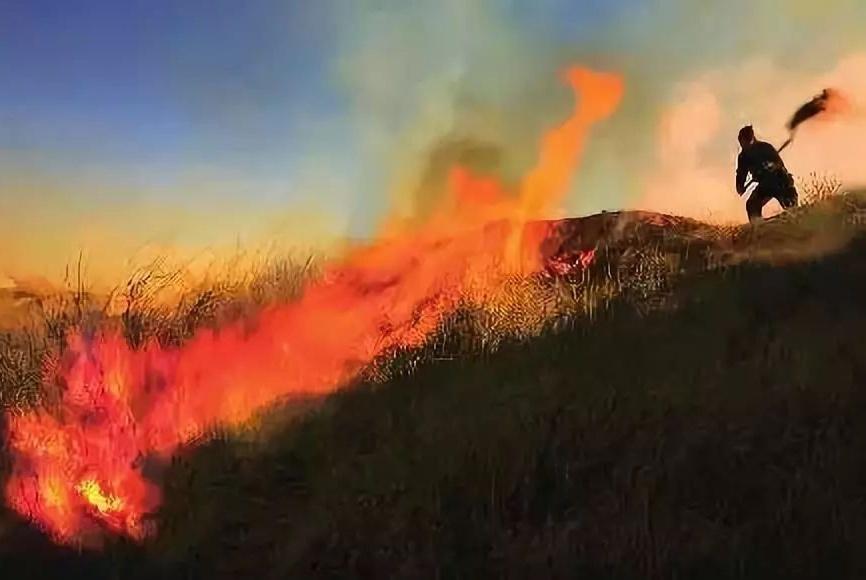 大连瓦房店一村民上坟烧纸引发森林火灾被刑拘