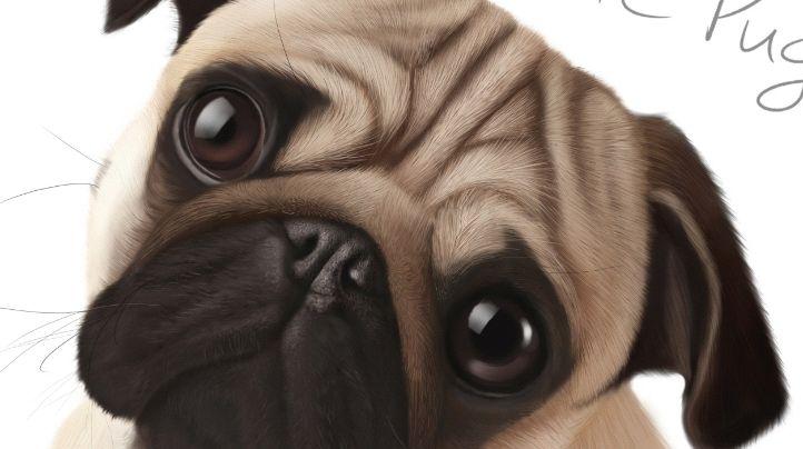 中国名犬大盘点!四眼土狗:不应被遗忘的中华田园犬